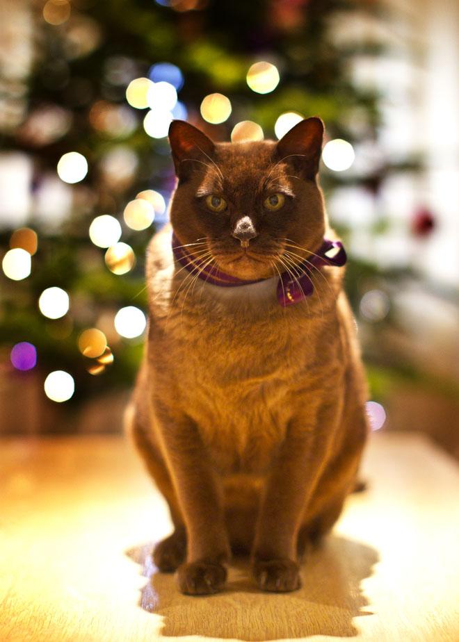 Jake Christmas